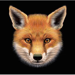 Les Machines Molles - The Fox And Other Stories LP + CD